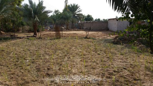 مزرعة السفير الأولى تشهد إنشاء مشروع تربية وتسمين العجول لغرض بيعها